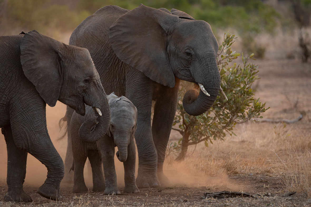Tanda Tula - herd of elephants in the Greater Kruger