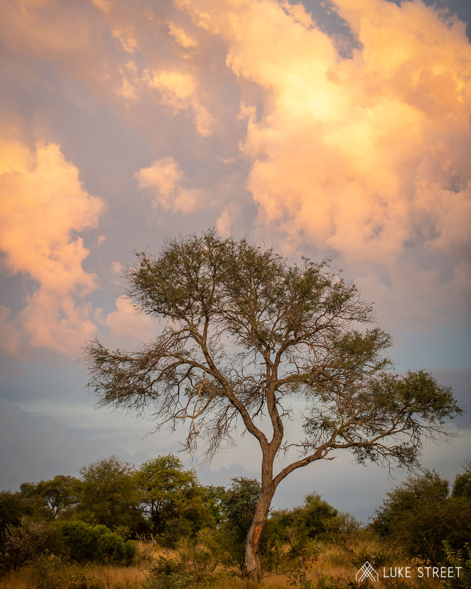 Tanda Tula - amazing weather on safari in South Africa