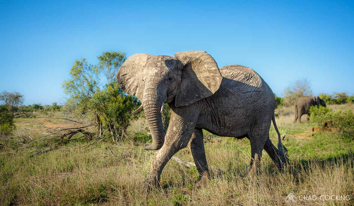 Tanda Tula - elephant cow on the best safari in South Africa