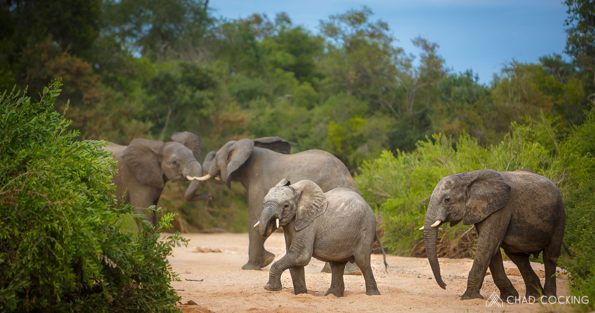 Tanda Tula - elephant herd in the Greater Kruger, South Africa