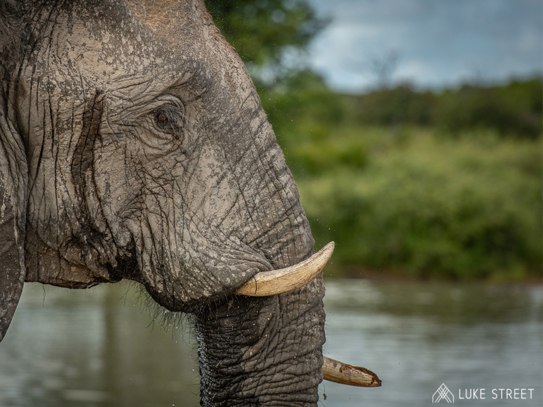 Just How Do Africa's Animals Stay Cool?