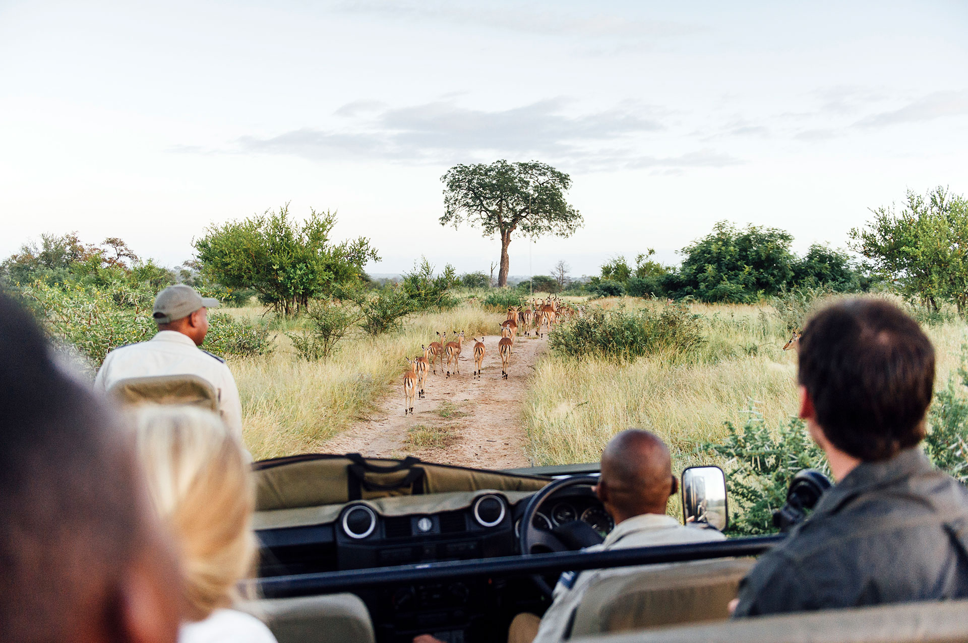 Tanda Tula - game drive on safari in the Greater Kruger
