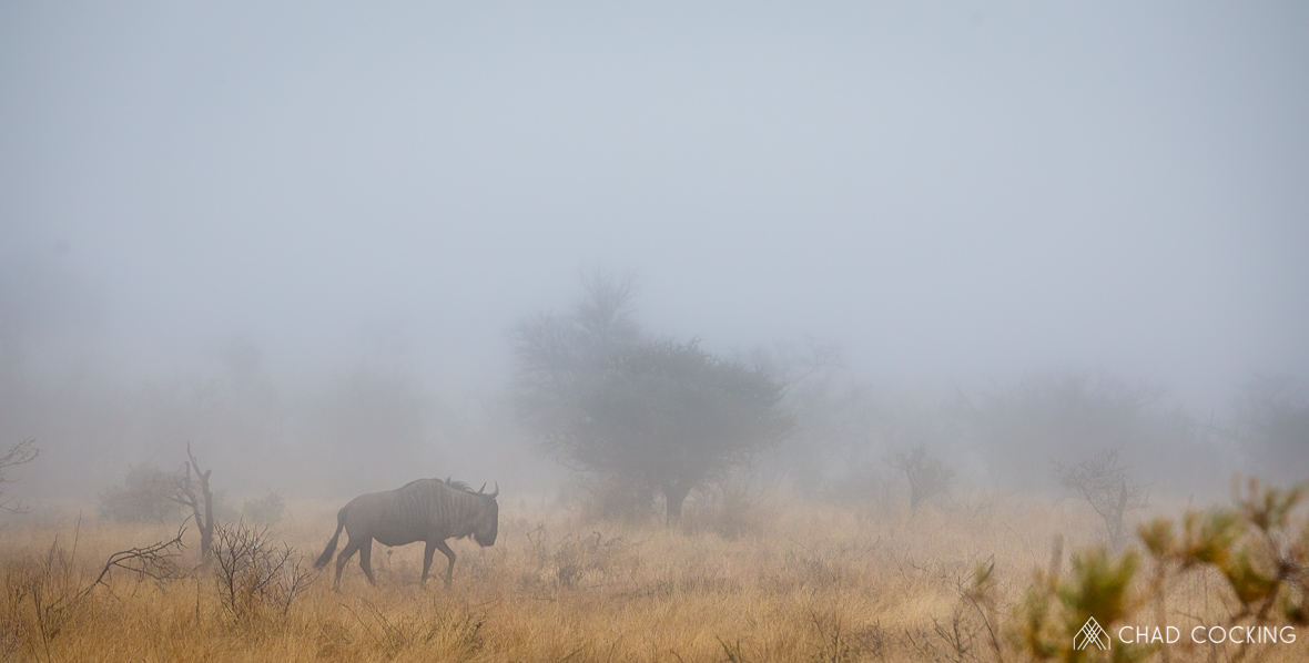 Tanda Tula - thick mist on a walking safari in South Africa