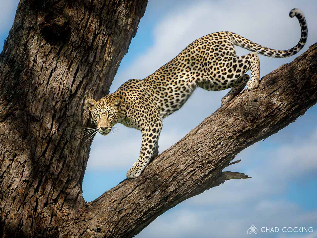 Timbavati Bliss In Pictures