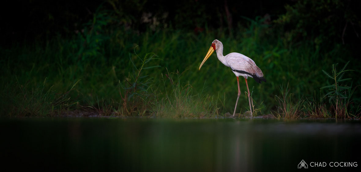 Tanda Tula - yellow billed stork in the Greater Kruger