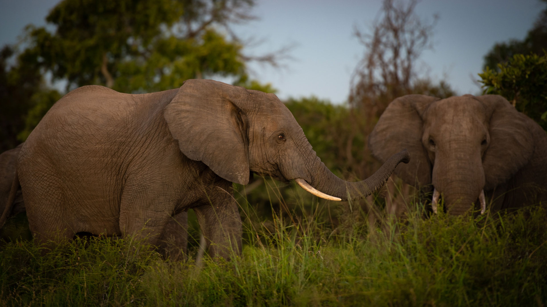 Tanda Tula - elephant bull in the Greater Kruger